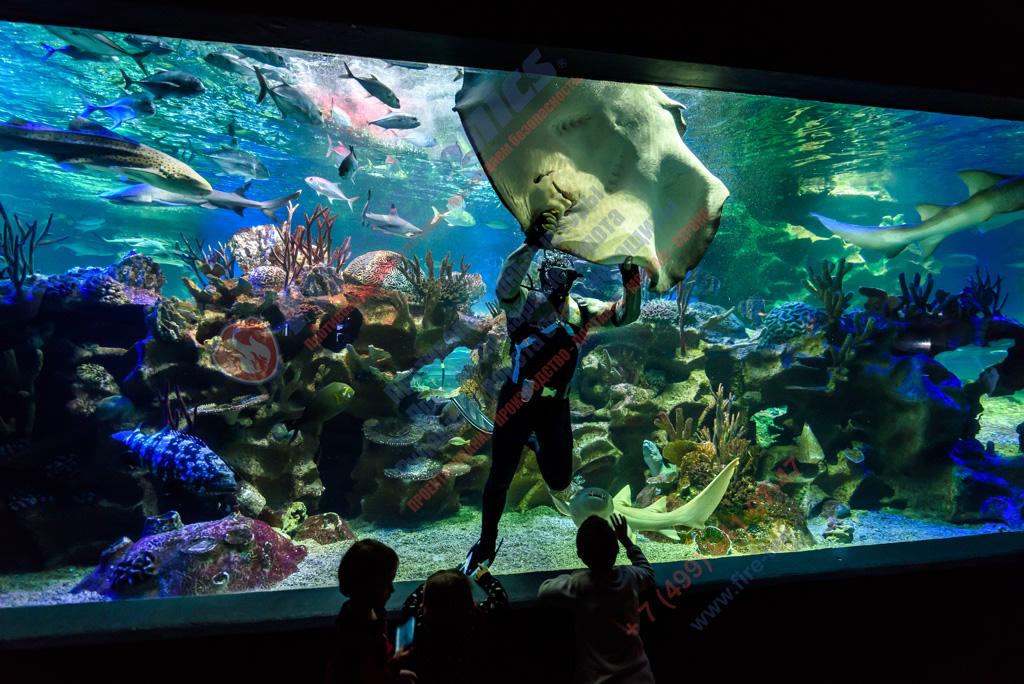 Новый океанариум в Санкт-Петербурге